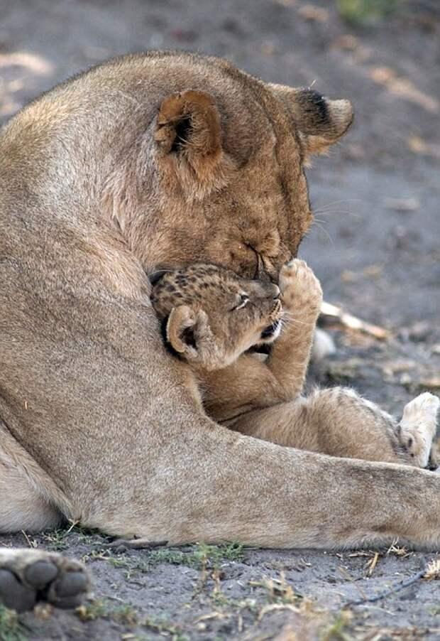 Львица со своим детёнышем