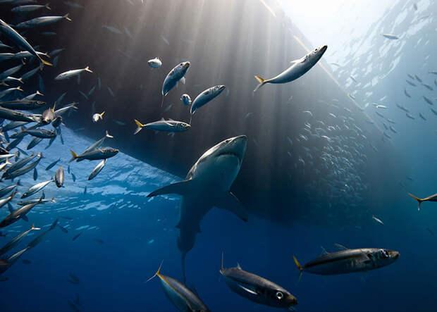 Подводный хищник (Marc Henauer, Мексика).