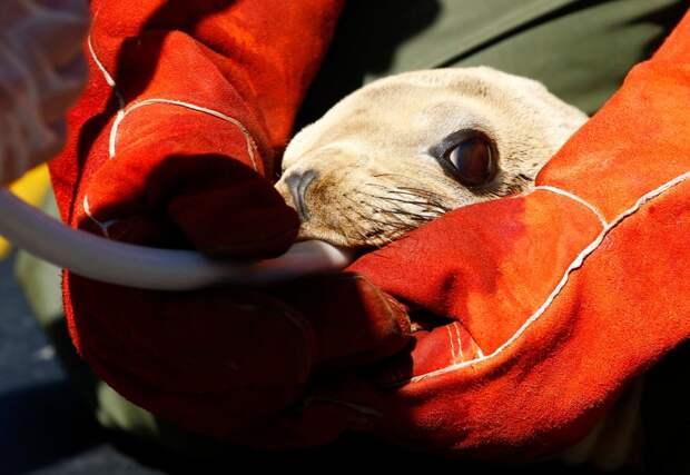 морские львы нуждаются в помощи-2