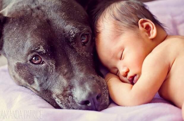 младенцы и собаки первая фотосессия