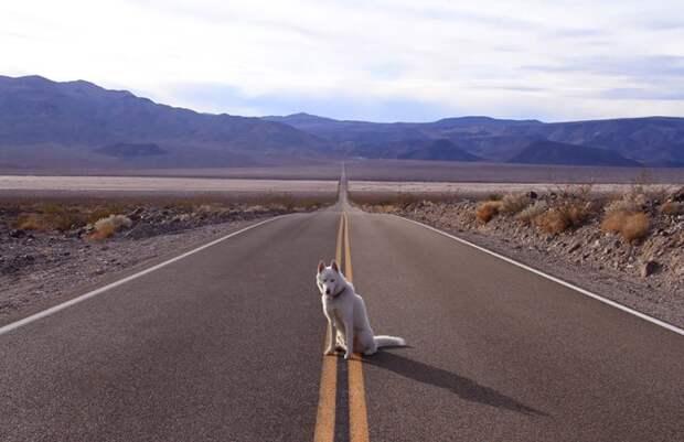 путешествие по США Джона Шторца и его собаки Вольфа (11)