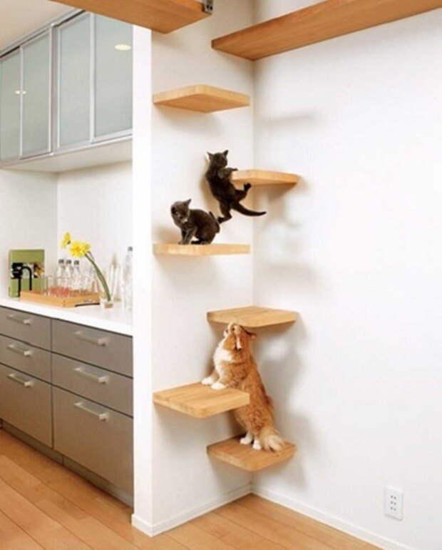 cathouse27 Дизайн для котов