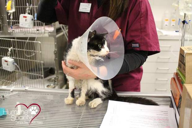 Раздавленный машиной и похороненный заживо кот, стал немного счастливее животные, кот, спасение