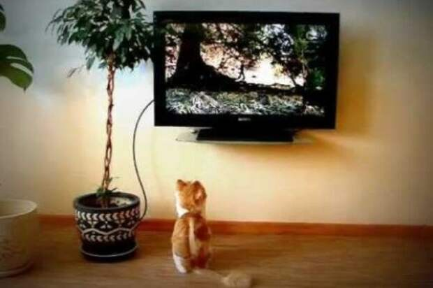 Кот – консультант