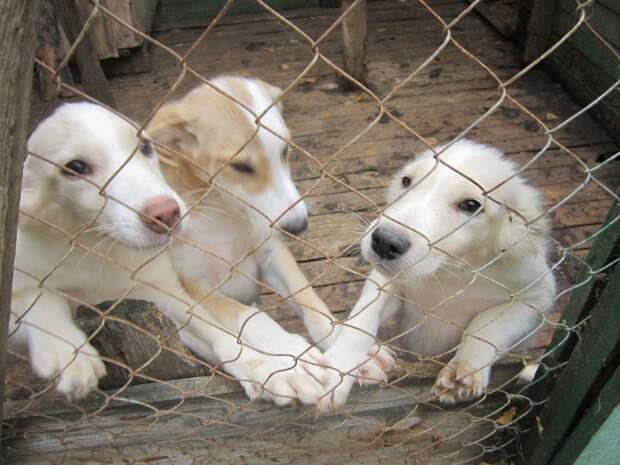 Эти щенки ждут любви и заботы! Найдитесь, хозяева, позвоните прямо сейчас…