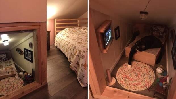 Кот, у которого есть миниатюрная комната с телевизором, покорил Сеть