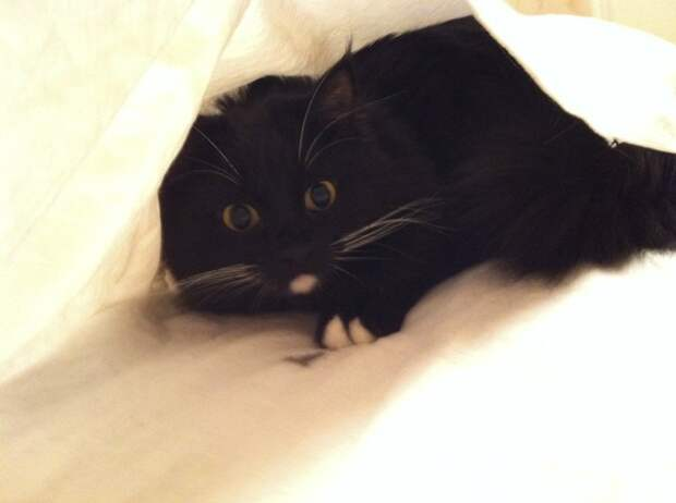Наш кот Батон