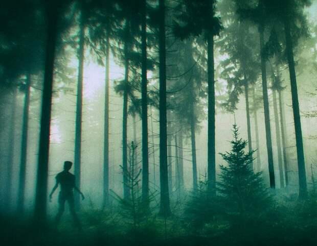 Нечто в лесу.