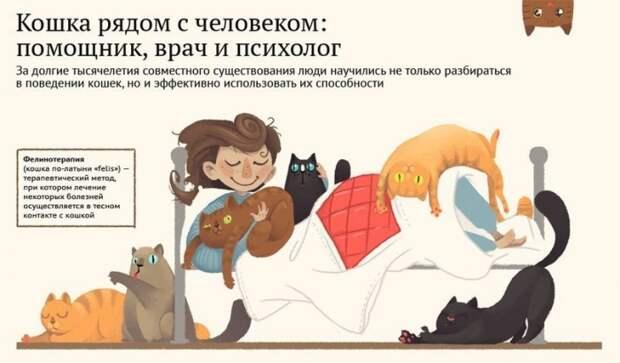 кошки-лекари