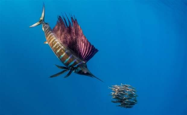 Удивительный и красочный мир коралловых рифов