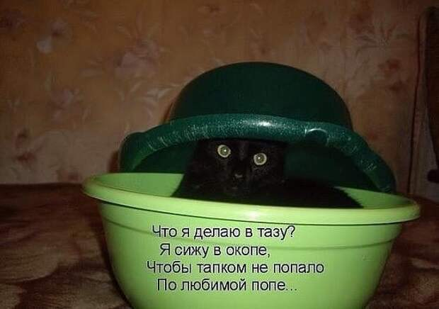 Анекдоты в пятницу (котоматрица)