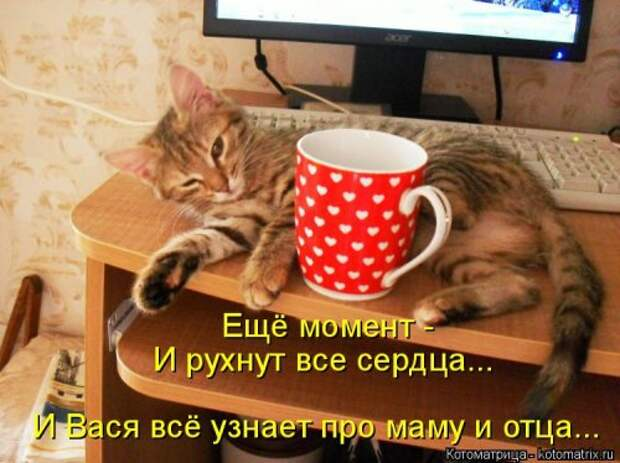 Новая котоматрица для настроения (38 фото)