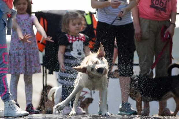 Собачий дайвинг: только для решительных псов