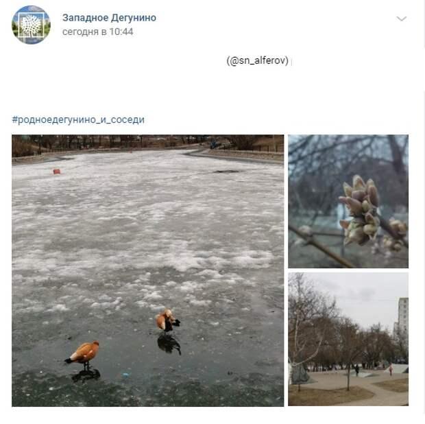 Фото дня: на Дегунинском пруду все еще лед