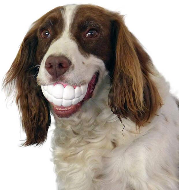 Собаки с игрушками — смешные моменты животные, игрушки, позитив, собака