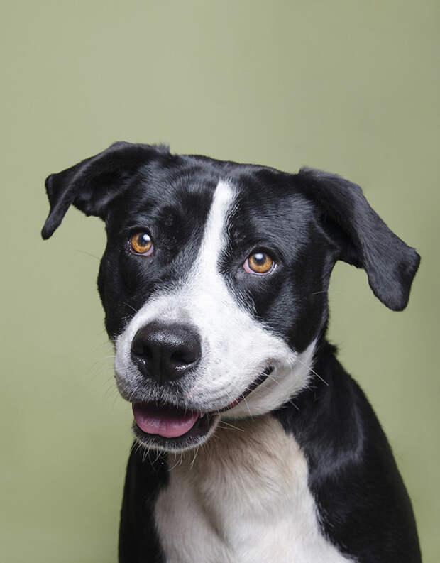Портреты собак из приюта