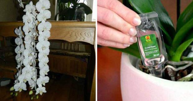Правильная подкормка орхидей: чего на самом деле не хватает цветку
