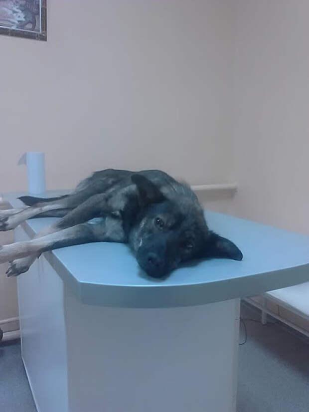 Собака с четырьмя пулями в голове выжила удивительным образом