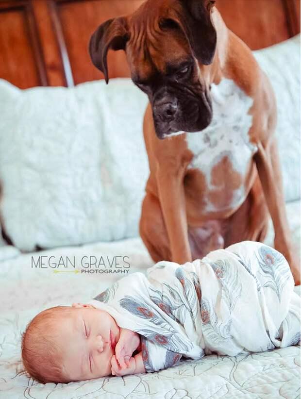младенцы и собаки первая фотосессия (9)