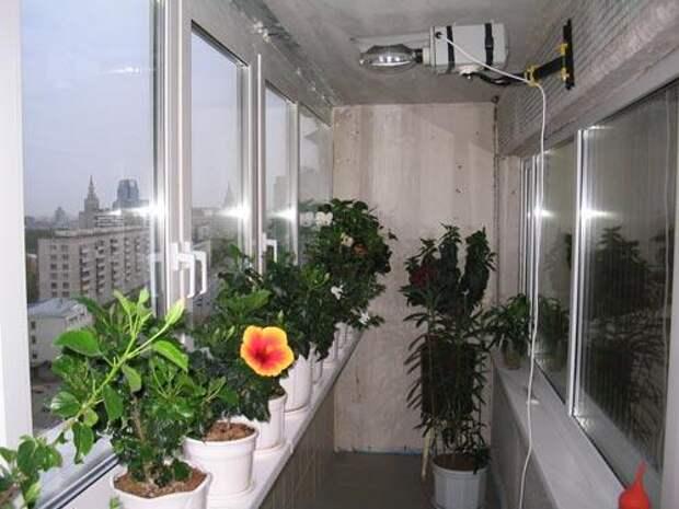Fenster1.jpg балконные цветы (500x375, 34Kb)
