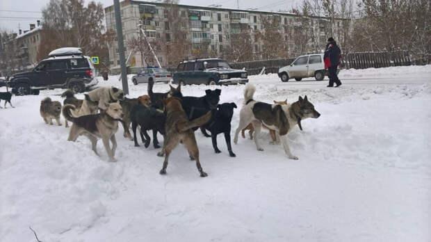 Жительницу Смоленска атаковала стая из шести бродячих собак