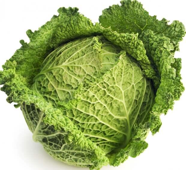 cabbage_1__