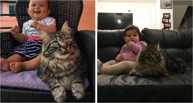 Пушистый нянька: кот прибился на ферму и стал настоящим другом для малышки