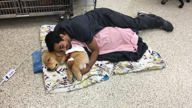 Трогательные снимки ветеринаров и их очаровательных пациентов