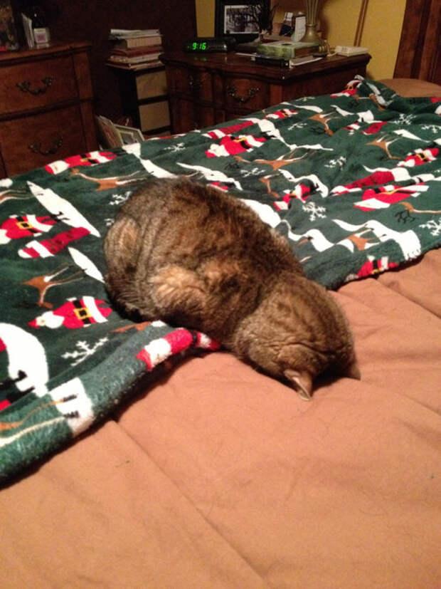 2. второй, третий, четвертый гримаса, кот, утро