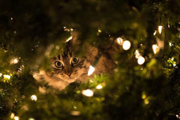 3. Сыграем в прятки? елка, кошка, подборка