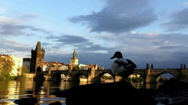 Чехия высылает всех сотрудников посольства России в Праге