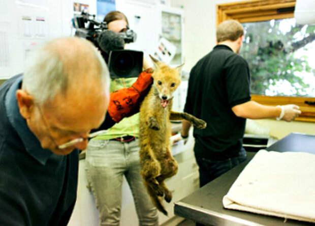 Эпическое спасение лисичек
