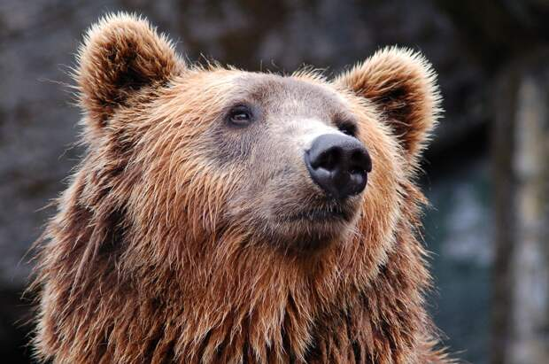 Отмена празднования Дня ВМФ в Можге, «два топора» сборной на Олимпиаде и случайное спасение мужчины от медведя на Аляске