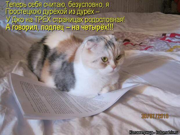 Котоматрица: Теперь себя считаю, безусловно, я Простецкою дурёхой из дурёх – У Джо на ТРЁХ страницах родословная! А говорил, подлец – на четырёх!!!