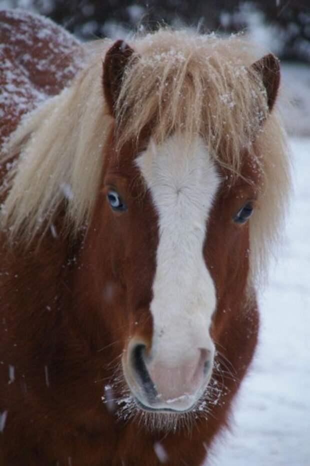 Разноцветные глаза у людей и животных.