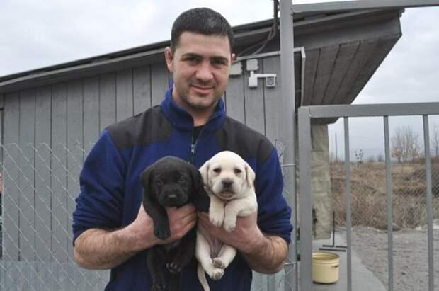 Вырастить героя. Кто и как учит собак спасать человеческие жизни