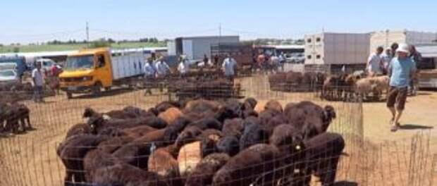 Корм подорожал, скот подешевел, а цена на мясо не меняется