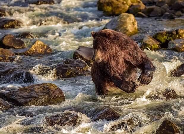 10 завораживающих фото заповедной долины гейзеров на Камчатке, по которой бродят медведи