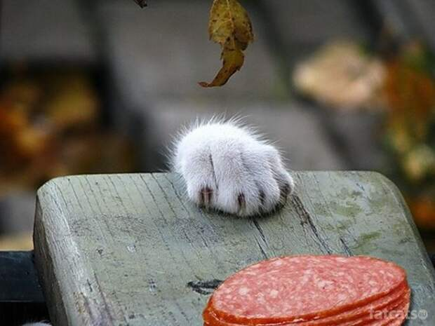 лапа, когти, доска, кот, кошка / Обои: Животные