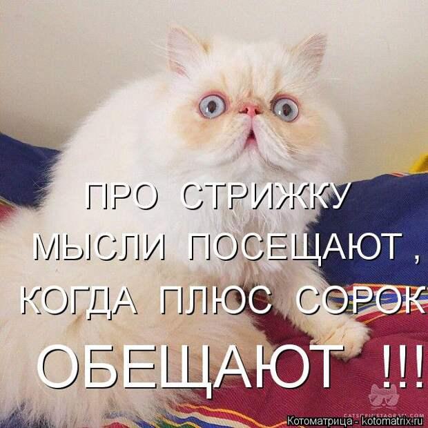 Котоматрица: ПРО  СТРИЖКУ МЫСЛИ  ПОСЕЩАЮТ , КОГДА  ПЛЮС  СОРОК ОБЕЩАЮТ  !!!