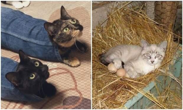 «Я – кот. Мне так удобно»: 20+ котеек, которые оказались в самых неожиданных местах