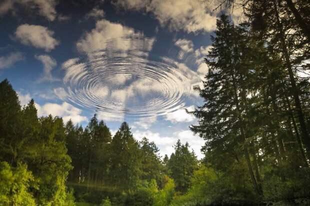 Отражение леса в воде