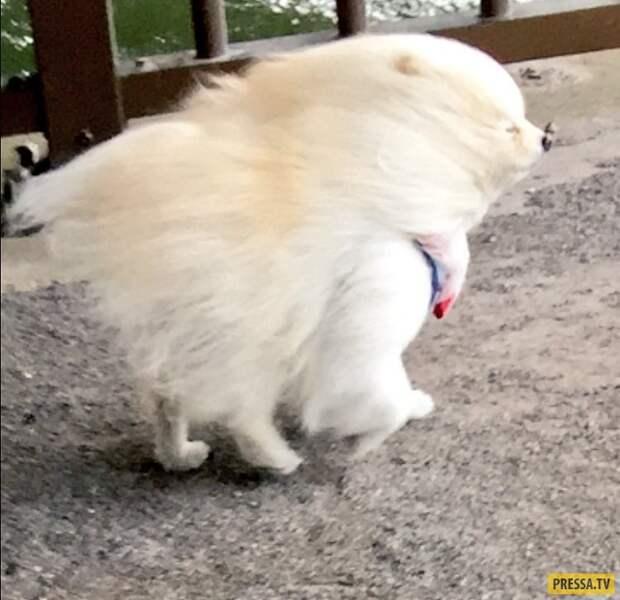 Прикольная подборка забавных животных (15 фото)