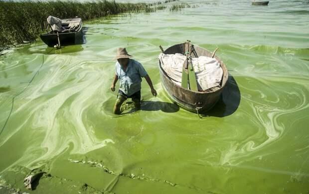 23. Рыбак, бредущий через озеро Чаоху загрязнение, китай, экология