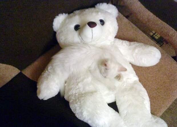Найди кота: 10 котов, знающих толк в маскировке