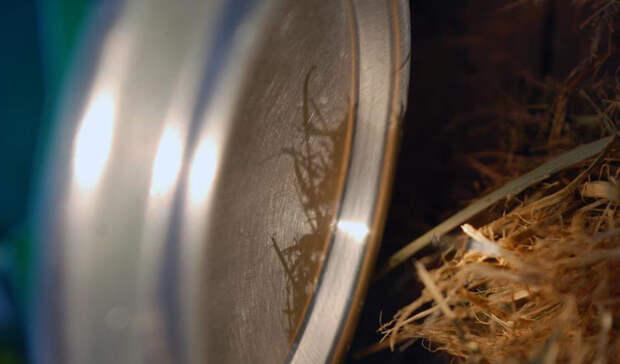 Всегда Кока-Кола Странный, но работающий метод. Ингредиенты: жестяная банка из-под содовой, шоколадка и яркий солнечный свет. Шоколад понадобится, чтобы отполировать вогнутое дно банки. Тщательно начищенное, оно превращается в отличный параболический отражатель. Теперь нужно повернуть дно к солнцу: результатом трудов будет узко сфокусированный луч света, направленный на приготовленный заранее трут. Через минуту-две должно появиться тление.