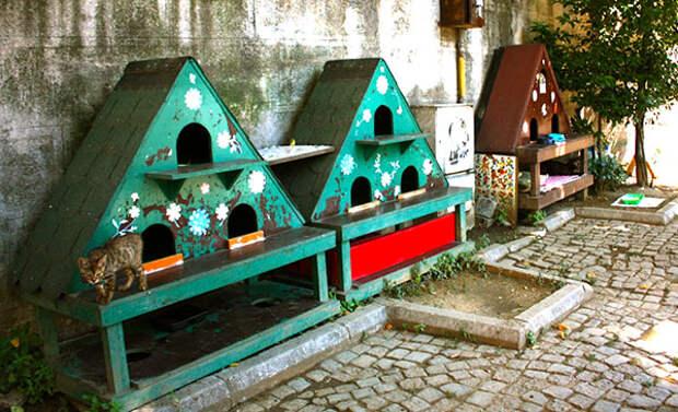 Домики для уличных кошек. Турция, Стамбул