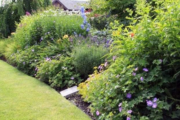 Многолетние кустарники служат естественной оградой