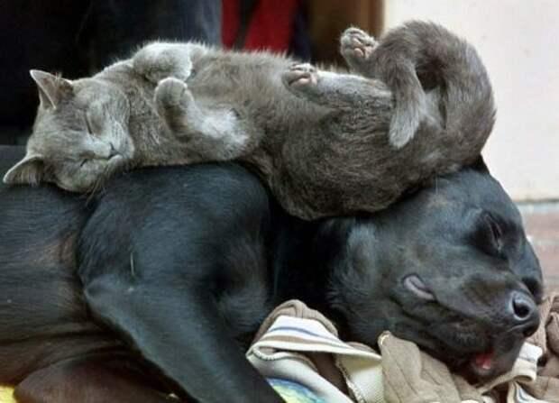кошки друзья