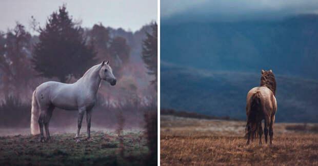 Лошадь — это красиво! 18 завораживающих фотографий свободолюбивых скакунов...